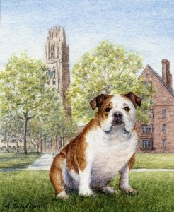 Bulldog on Campus, Yale