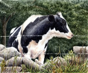 Portrait of a Cow, Tiffany Farm, Lyme